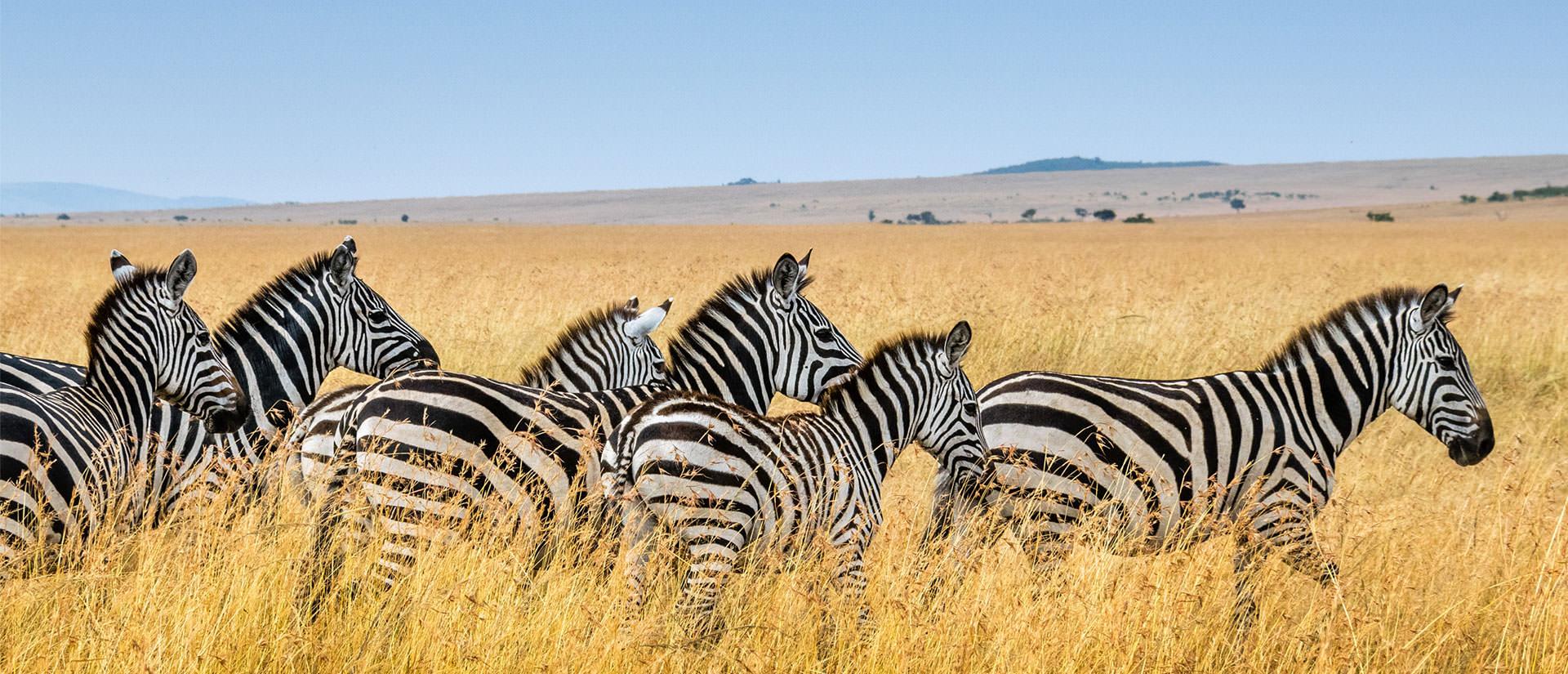 שמורות הטבע של טנזניה
