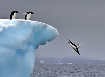 טיולים לאנטארקטיקה