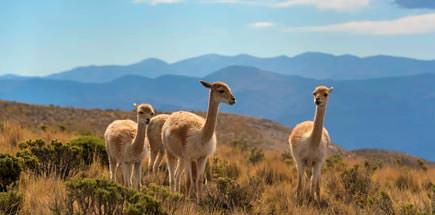 עשרה דברים מעניינים שכדאי לדעת על ארגנטינה