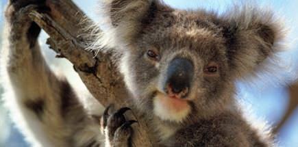 עשרה דברים מעניינים שכדאי לדעת על אוסטרליה