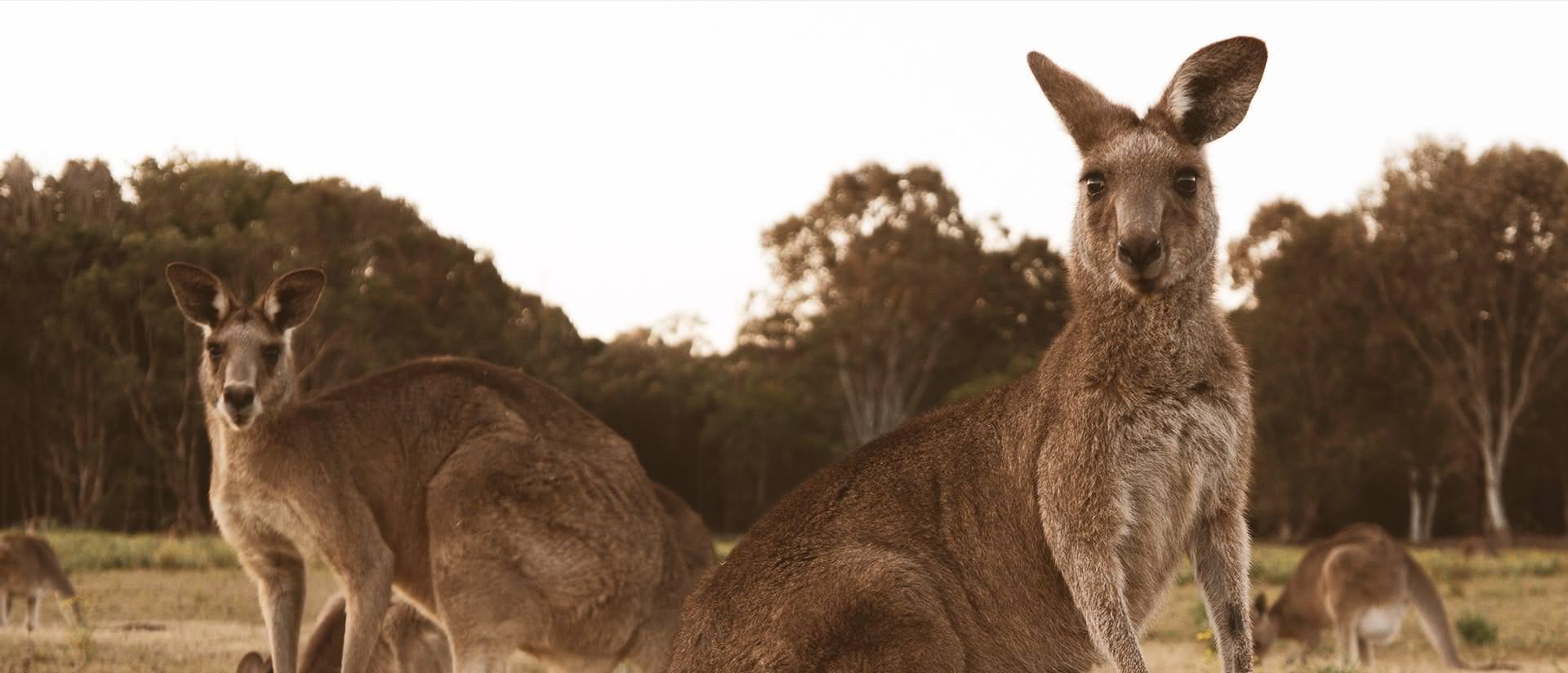 אוסטרליה והפסיפיק