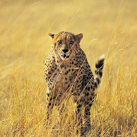 טיול לזימבבואה ובוצואנה - 9 ימים - אל שמורות הטבע האוונגה וצ'ובה, ומפלי ויקטוריה