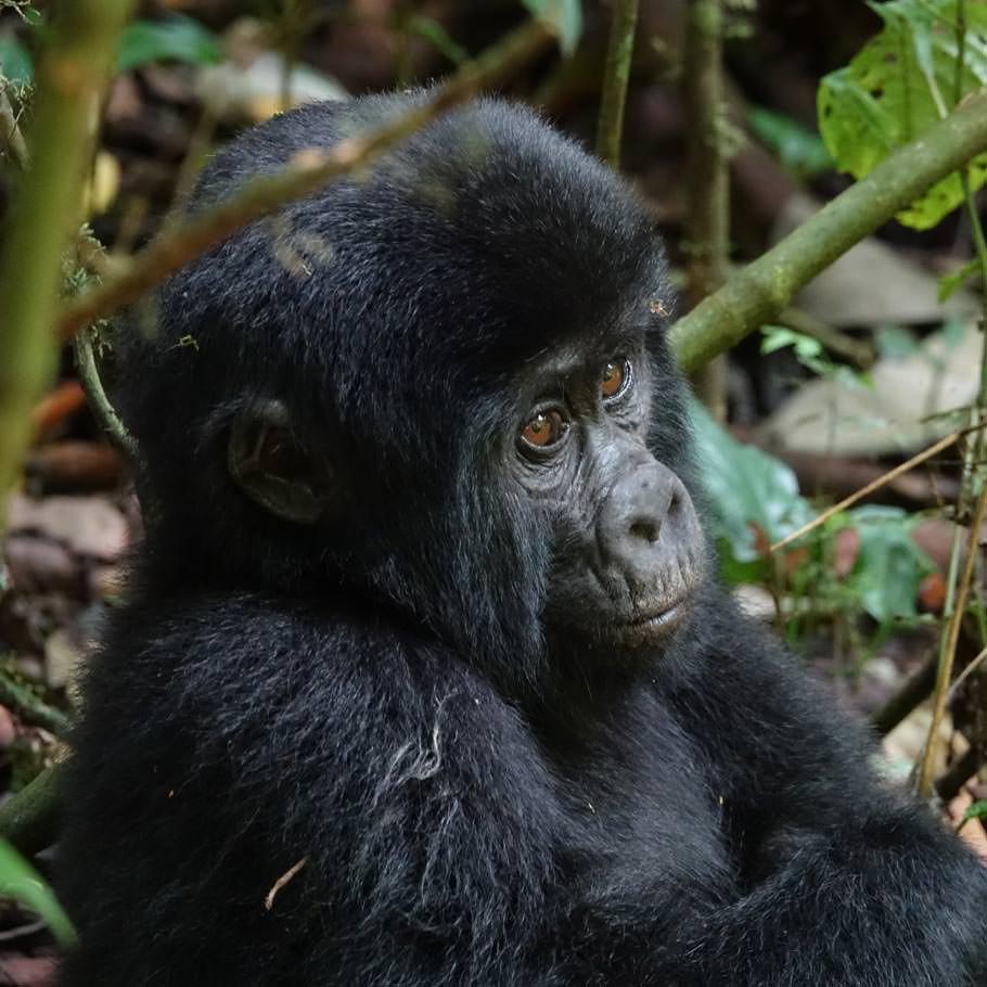 טיול לקונגו - 8 ימים - טיול ייחודי אל שמורת וירונגה