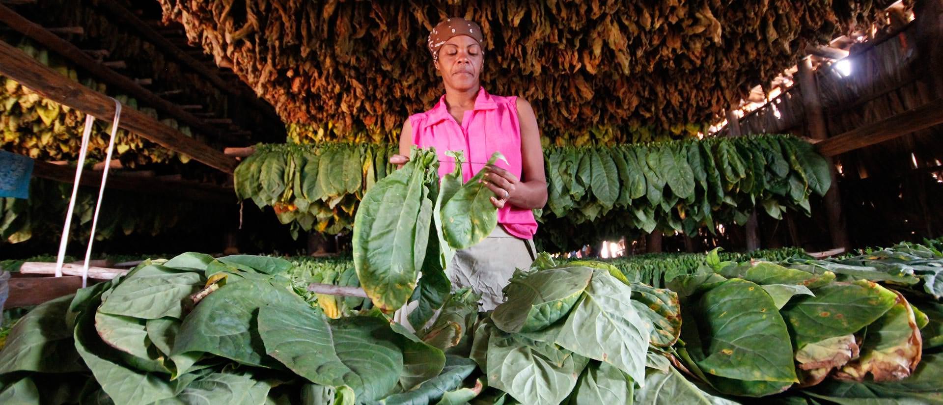 טיול מאורגן לקובה עם החברה הגיאוגרפית