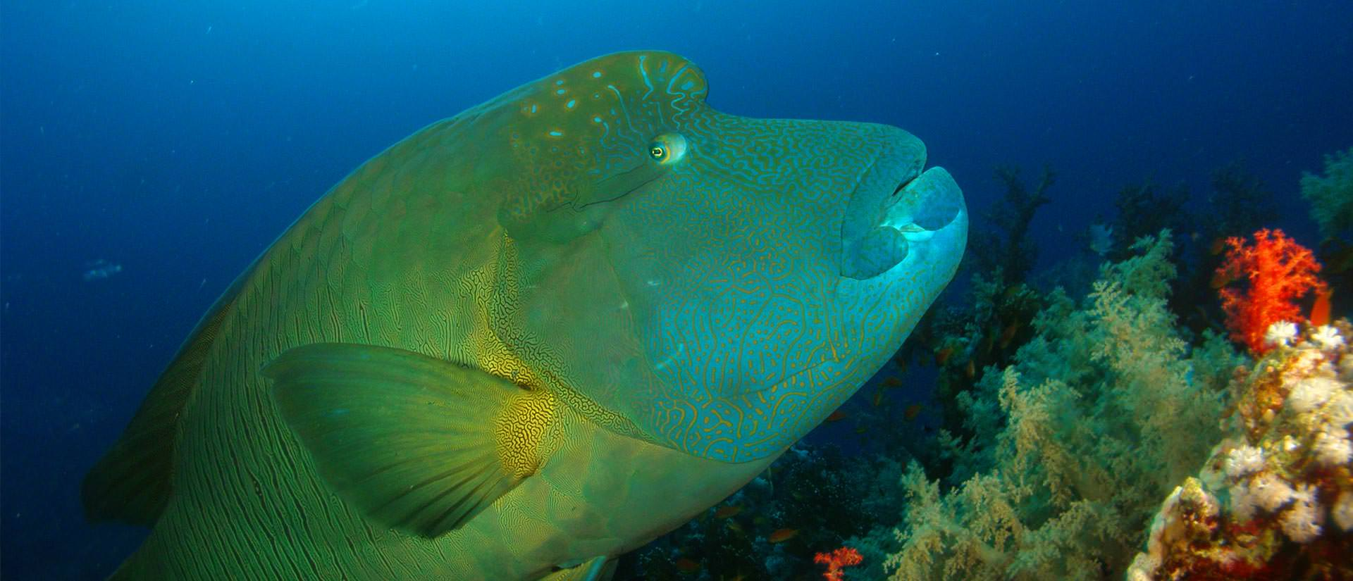 קורס הנייטרוקס של צלילה גיאוגרפית