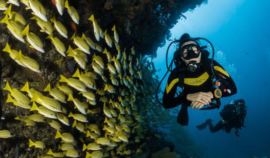 אז מהם היעדים הטובים ביותר בעולם לספארי צלילה?