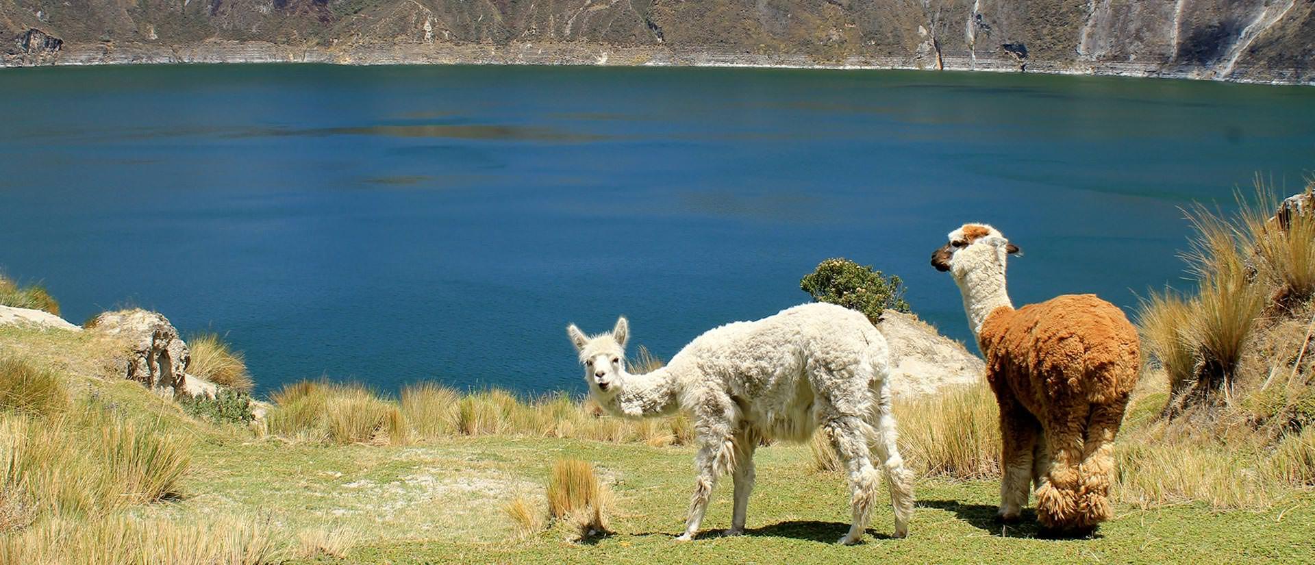 עשרה דברים מעניינים שכדאי לדעת על אקוודור