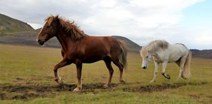 טיול מאורגן לאיסלנד - העונה המומלצת לטיול באיסלנד