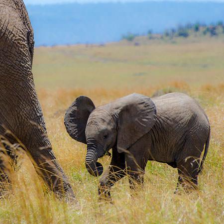 טיול לקניה - 8 ימים - אל שמורות הטבע הגדולות