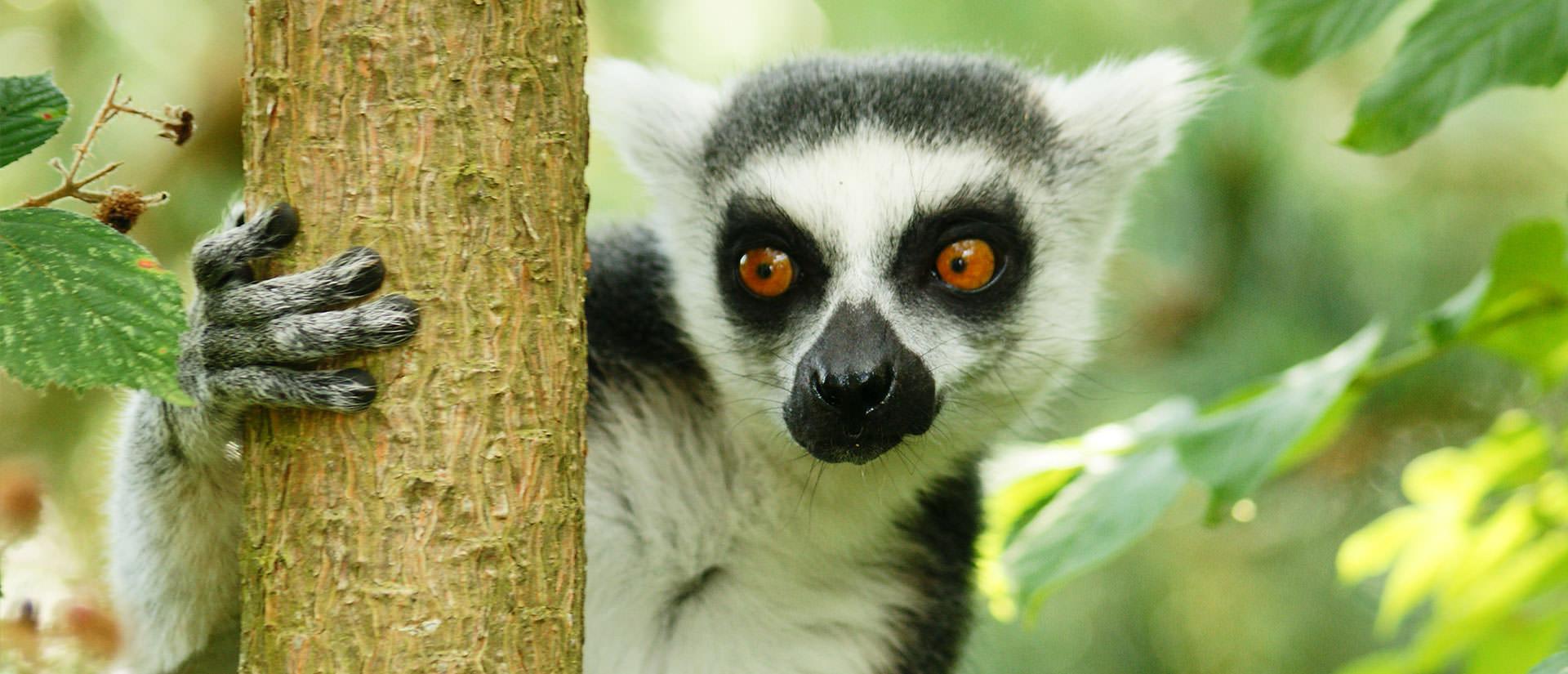 טיול למדגסקר - 13 יום - אל אי מיוחד במינו