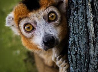 טיולים מאורגנים למדגסקר