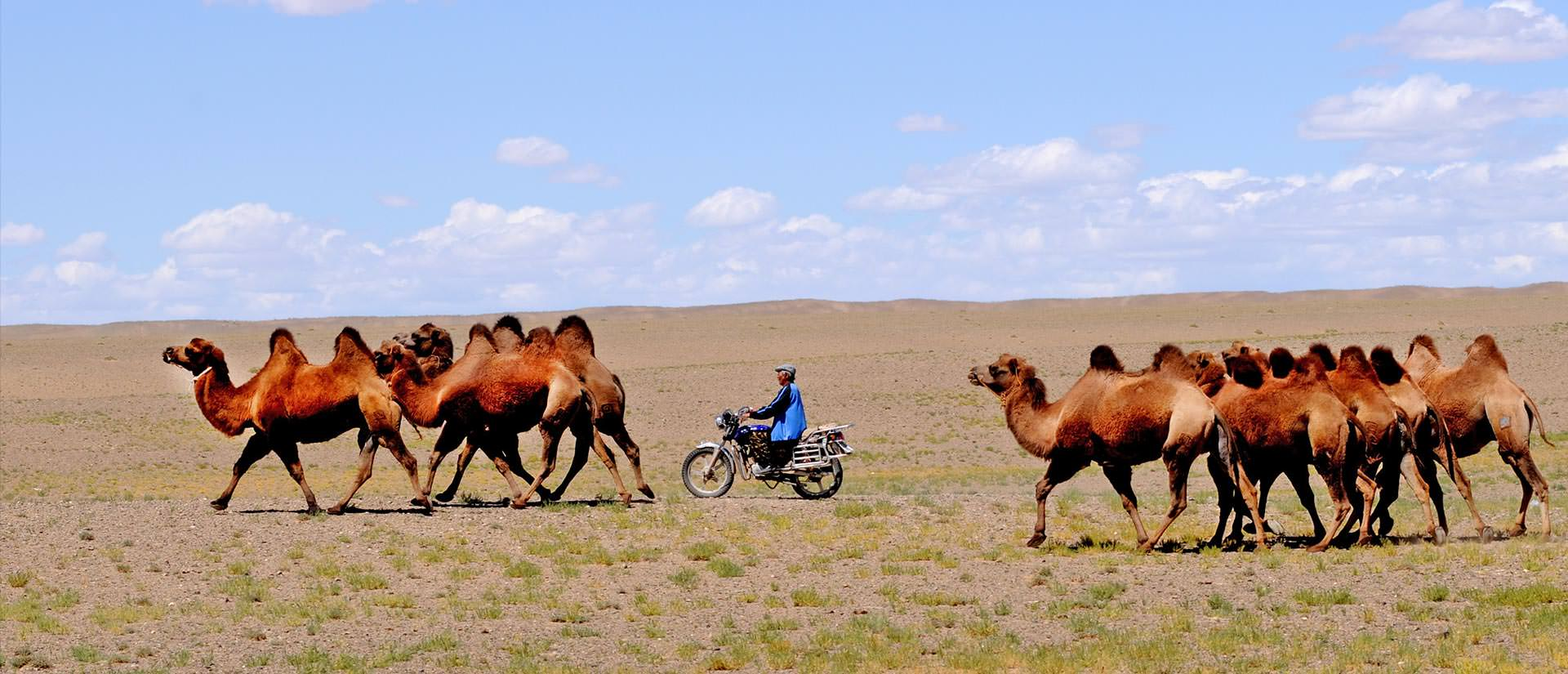 טיול למונגוליה עם החברה הגיאוגרפית