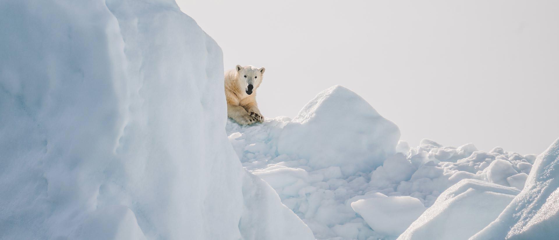 דובי קוטב - טיול לשפיצברגן
