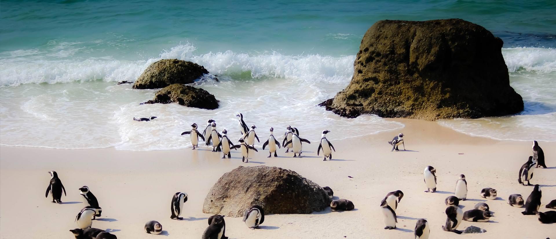 טיול לדרום אפריקה - 12 יום - טבע, ספארי, היסטוריה ותרבות