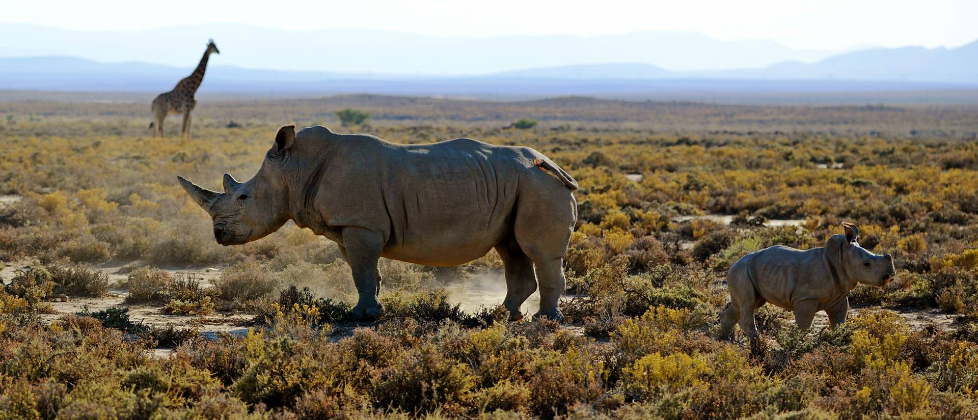 אתרים נבחרים בדרום אפריקה