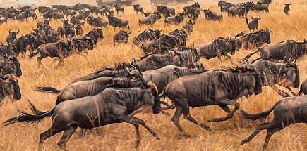 הנדידה הגדולה - טיול מאורגן לטנזניה