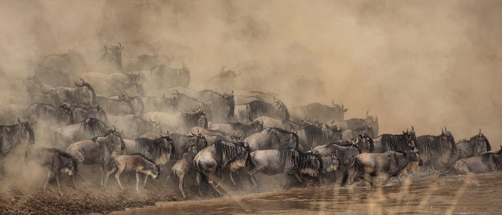 הנדידה הגדולה במרחבי הסרנגטי, טנזניה