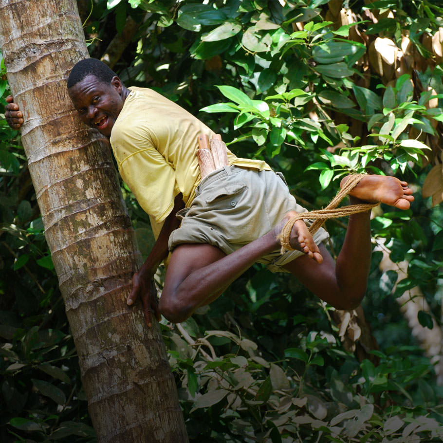 ספארי בטנזניה כולל שמורת טרנגירי