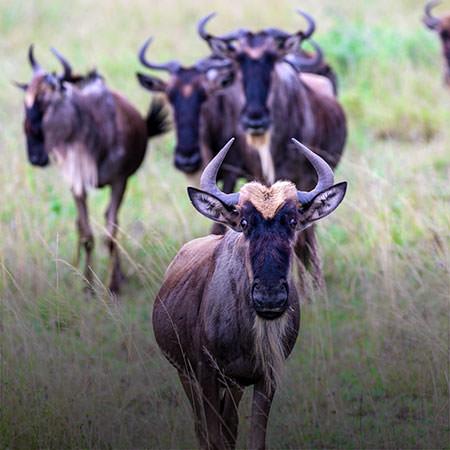 טיול לטנזניה - 8 ימים - בעונת ההמלטות