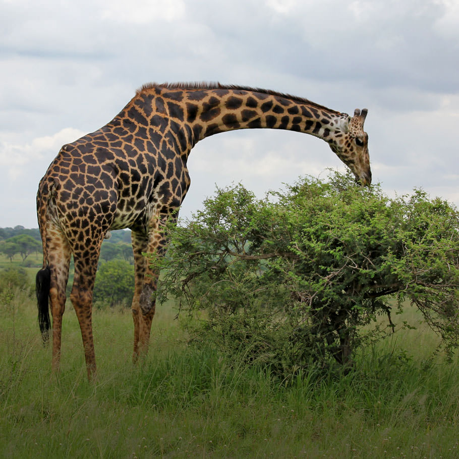 טיול לטנזניה בטיסה ישירה - 9 ימים - טנזניה פרימיום