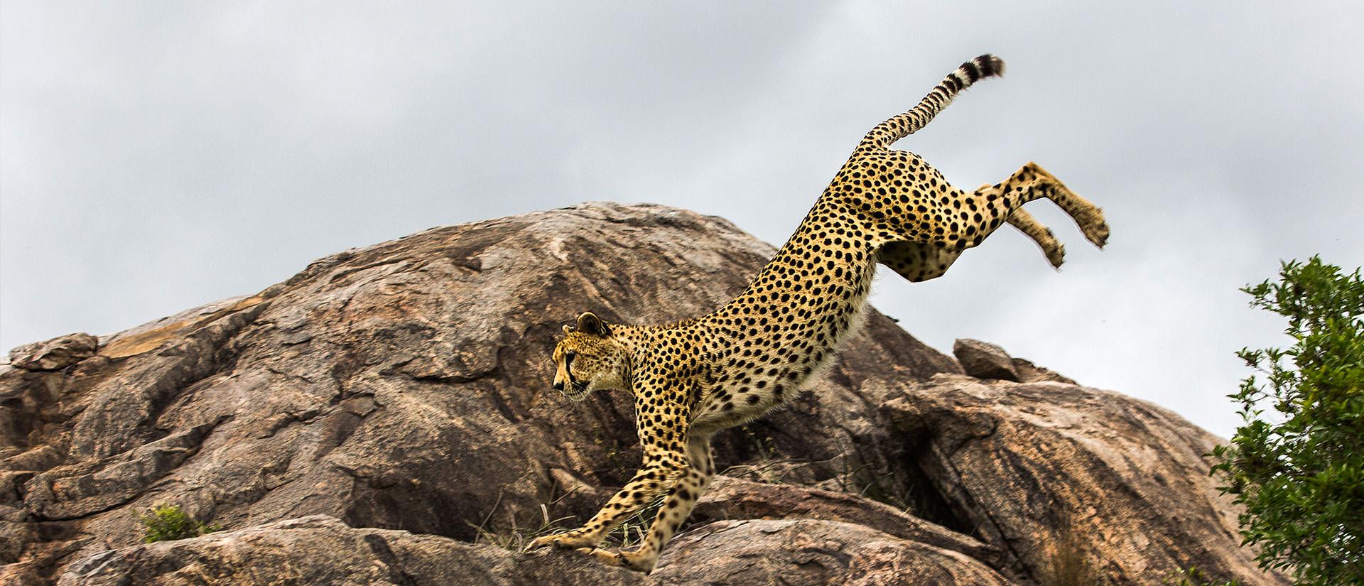 דרום טנזניה