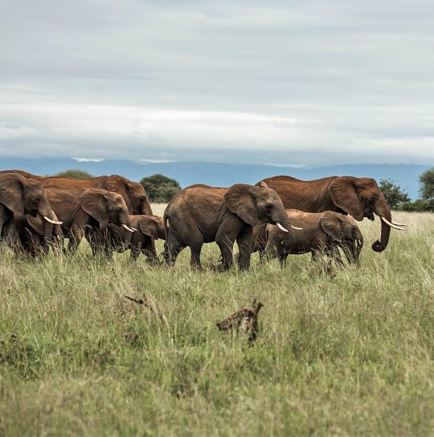 קניה 9 ימים