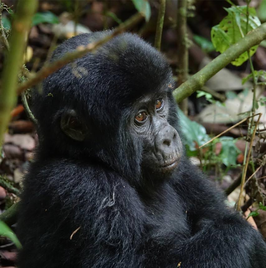 אוגנדה  11 יום