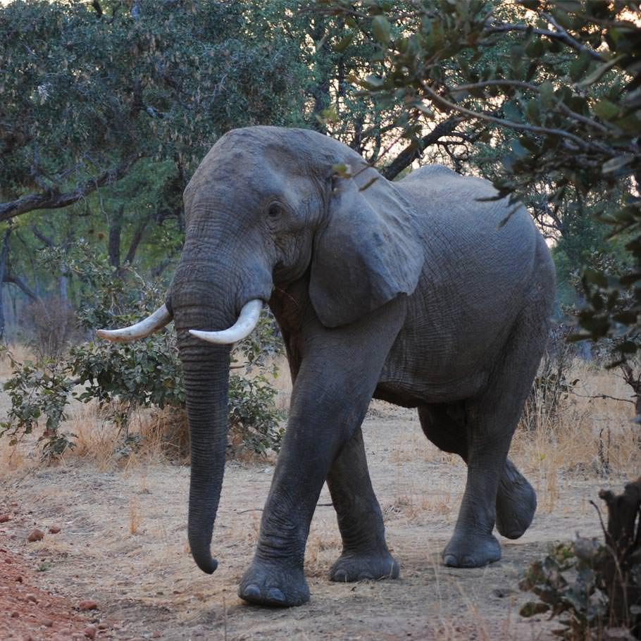 טיול לזמביה וזימבבואה - 11 יום - בעקבות 'הטיול הלבן'