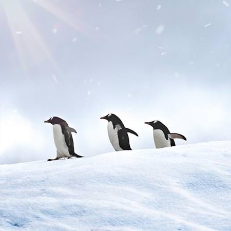 טיול לאנטארקטיקה - 11 יום - הפלגה במסלול הקלאסי בחצי האי אנטארקטיקה