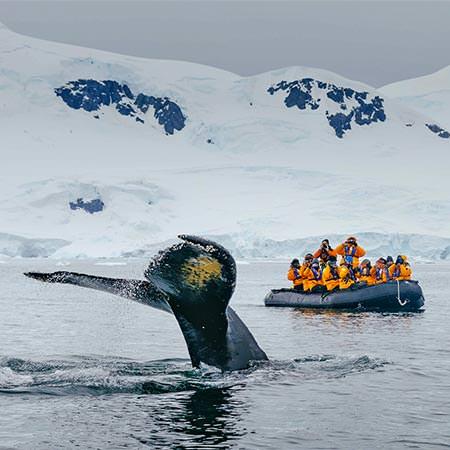 טיול לאנטארקטיקה - 11 עד 13 יום - הפלגה אל חצי האי האנטארקטי