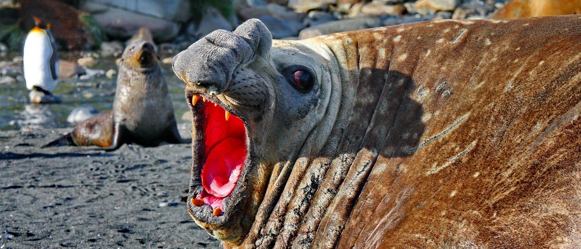 טיול לאנטארקטיקה, איי פוקלנד והאי ג'ורג'יה הדרומית – 16 עד 21 יום