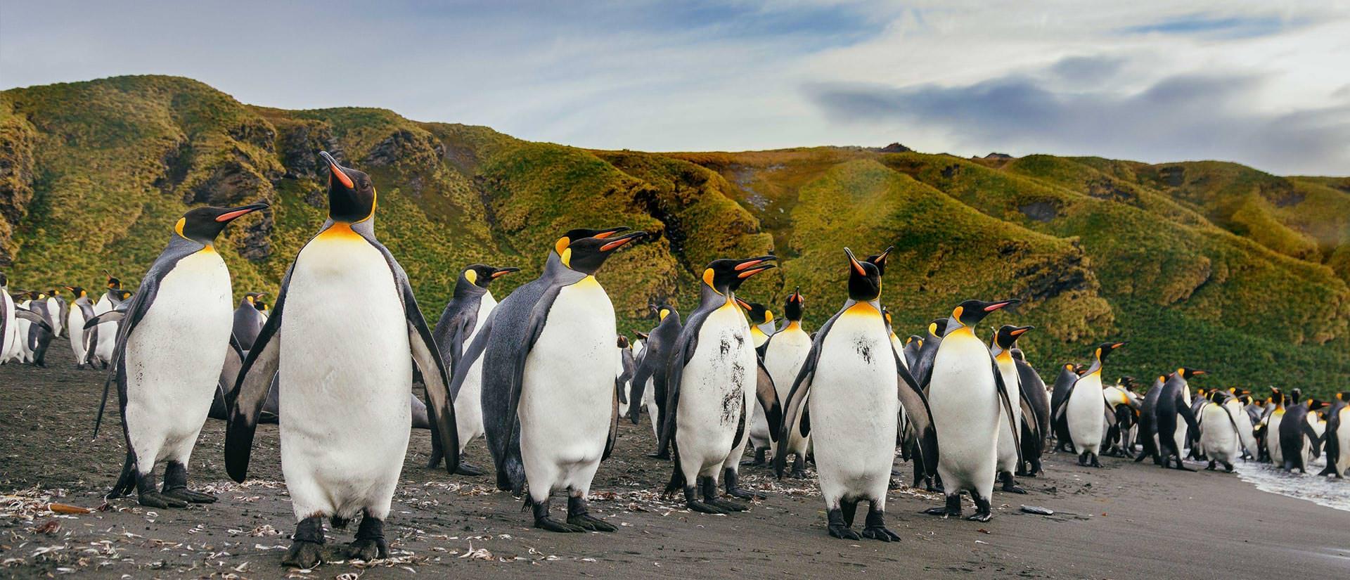 טיול לאנטארקטיקה - 20 יום - אנטארקטיקה, איי פוקלנד וג'ורג'יה הדרומית