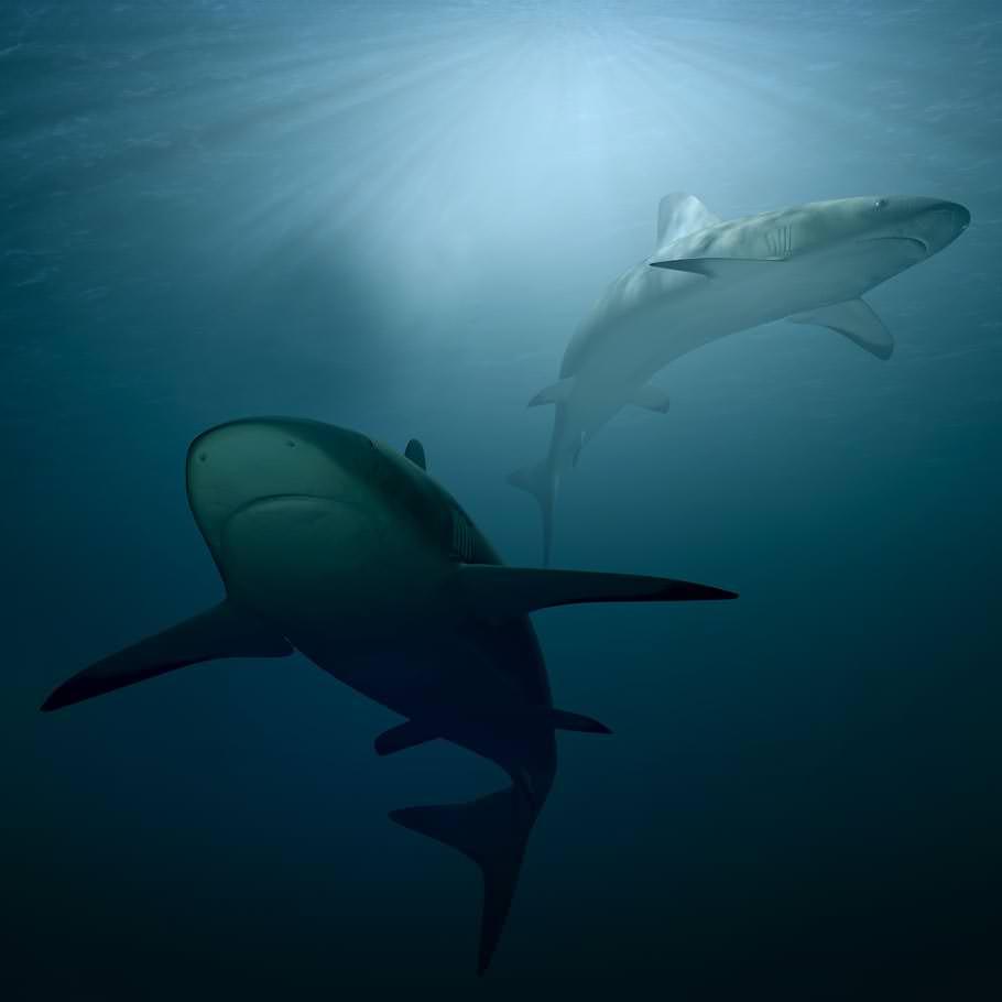 ספארי צלילה באיי הבהאמס - 10 ימים - כולל טייגר ביץ', פלורידה ועוד
