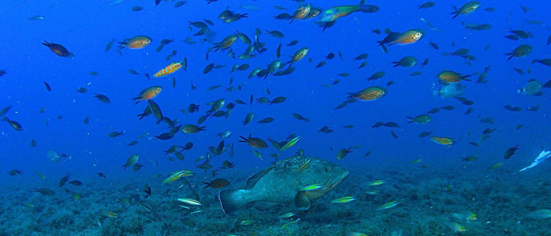 ספארי צלילה בקפריסין - 4 ימים - שיגעון בזנוביה