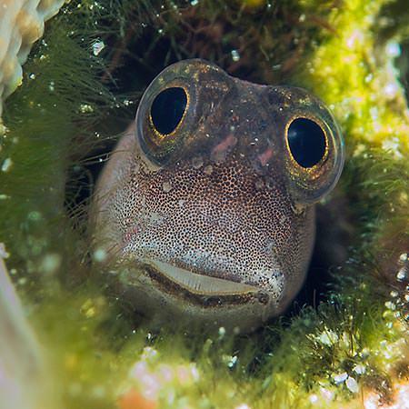 ספארי צלילה באינדונזיה - 15 יום - צלילה וטבע באינדונזיה