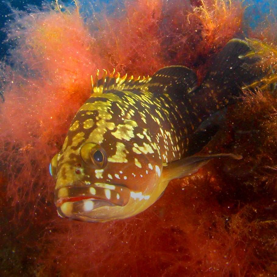 ספארי צלילה במלטה - 7 ימים - מלטה וגוזו