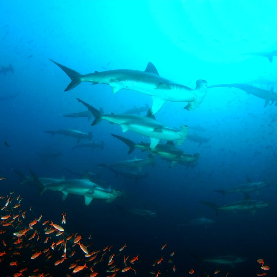 טיול צלילה לסוקורו, מקסיקו - 11 יום - כולל האי סן בנדיקטו ורוקה פרטידה