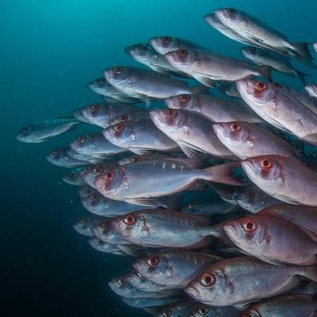 ספארי צלילה במוזמביק - 10 ימים - בשיתוף עם הגמל המעופף