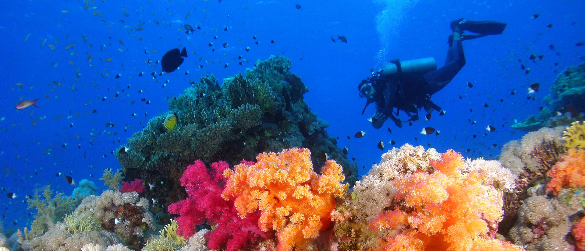 ספארי צלילה במצרים - 9 ימים - המיטב של דרום הים האדום