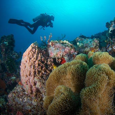 ספארי צלילה באיי פיג'י - 13 יום - אל האוקיינוס השקט