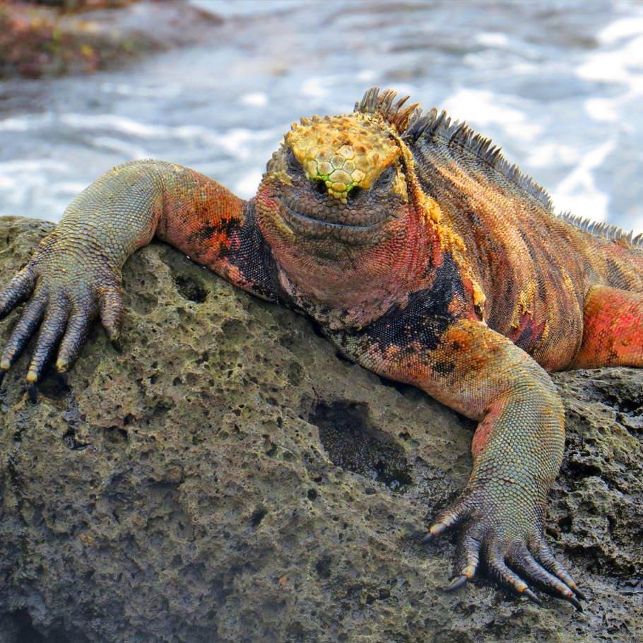 ספארי צלילה בגלפגוס - 9 ימים - הקסם של איי גלפגוס