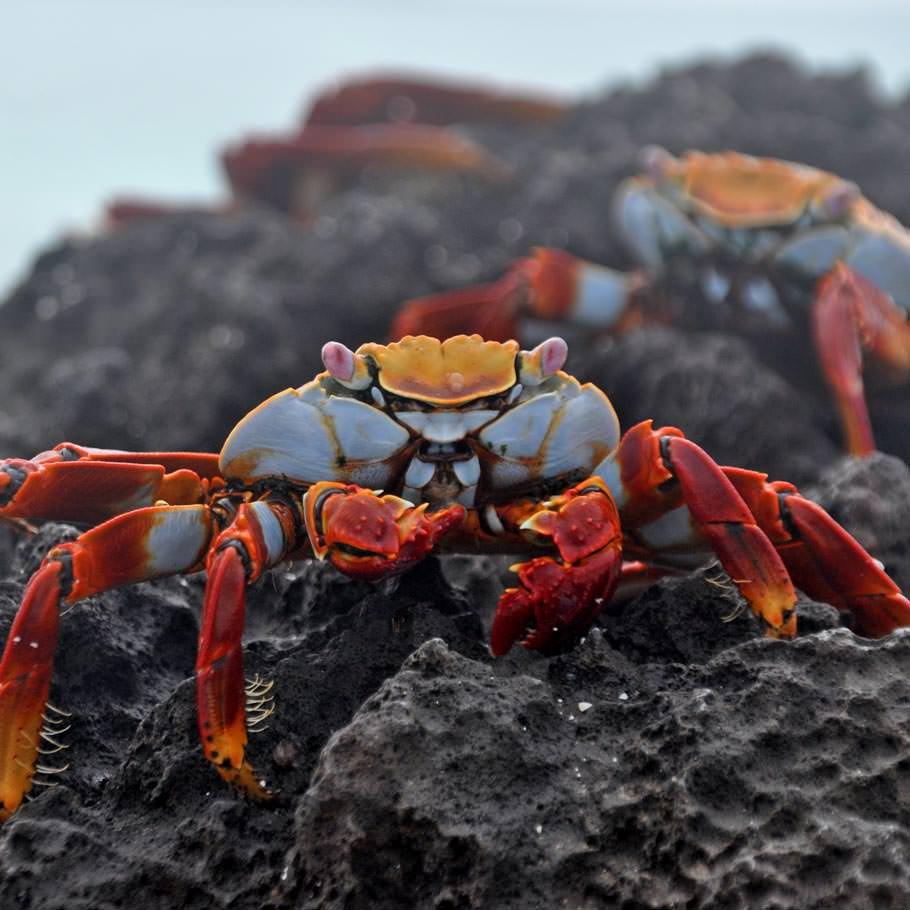 טיול לגלפגוס – 8 ימים – טיול שייט באיים המכושפים