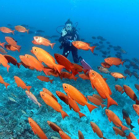 ספארי צלילה באיים המלדיביים - 13 יום - מלדיביים דרומי ענק