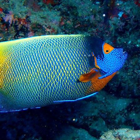 ספארי צלילה באיים המלדיביים – 9 ימים – מנטות במלדיביים