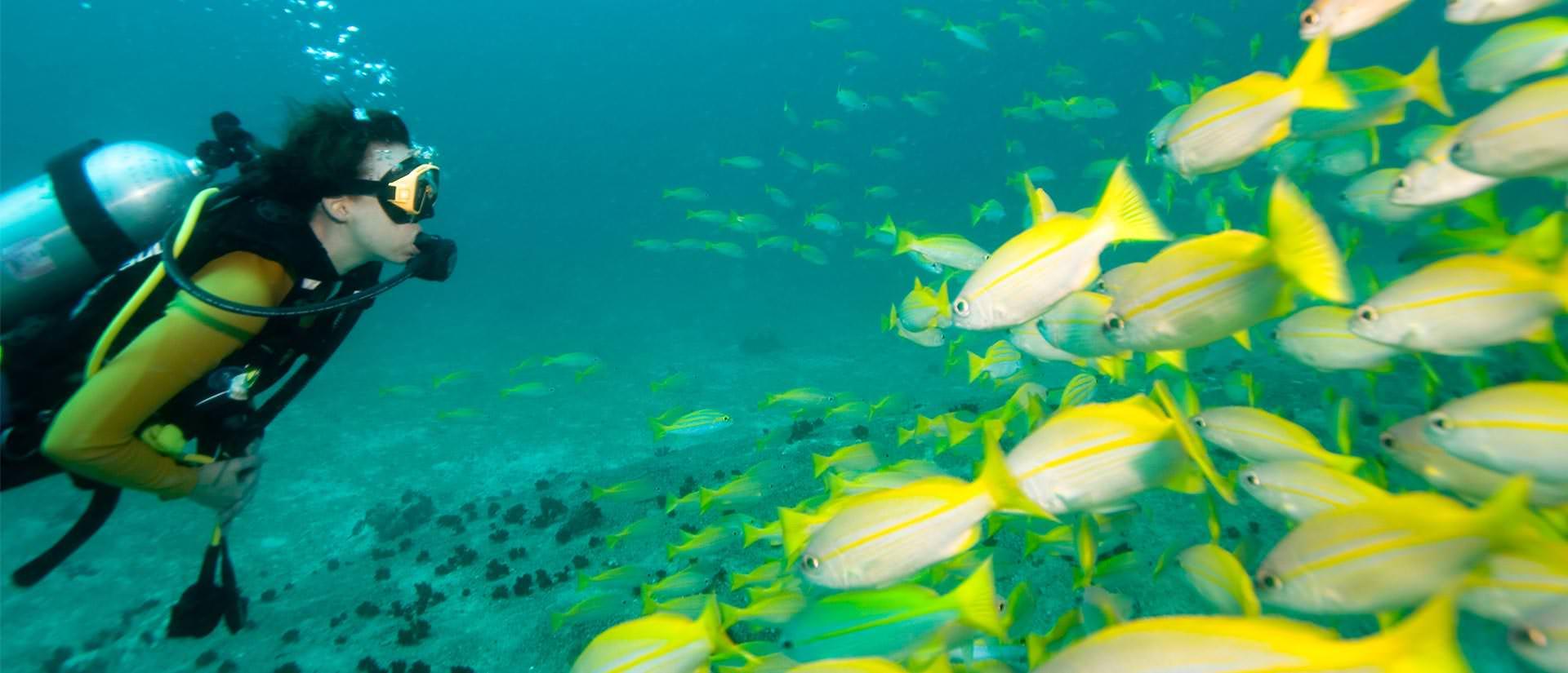 ספארי צלילה באיי סיישל - 8 ימים - הפלגת צלילה וטבע בסיישל