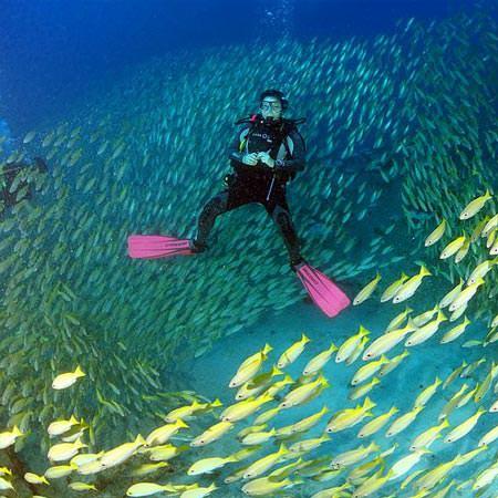 חבילת צלילה באיי סיישל - 8 ימים - הפלגת צלילה וטבע
