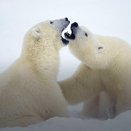 טיול לשפיצברגן - 8 עד 13 יום - שייט בעקבות דובי קוטב