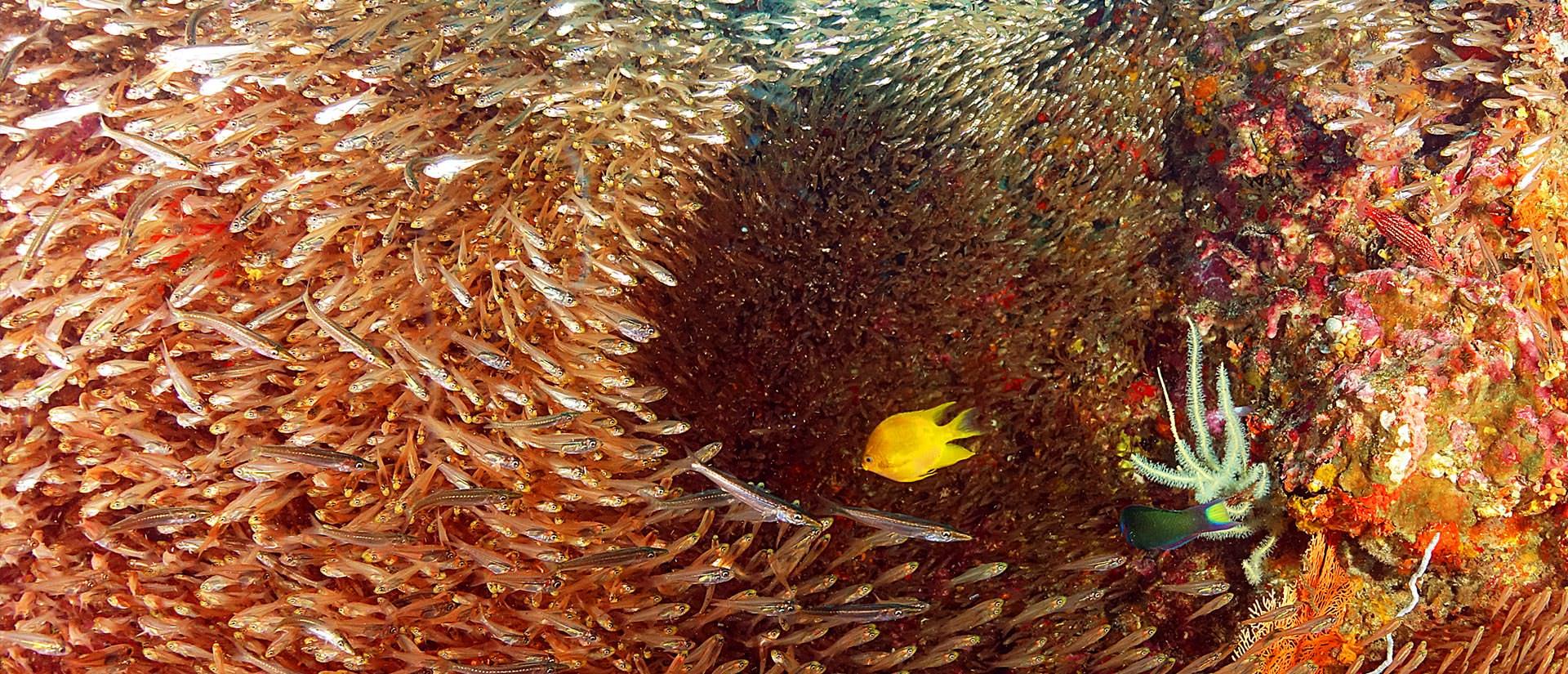 ספארי צלילה בתאילנד - 10 ימים - הפלגת צלילה וטבע בתאילנד