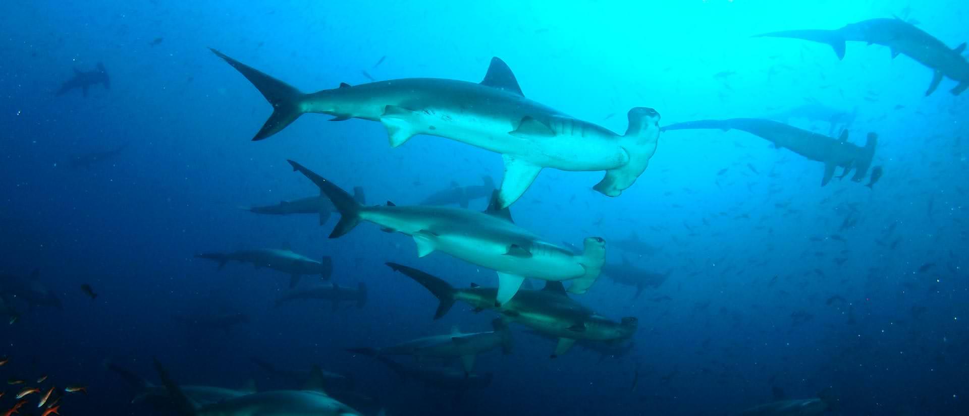 10 דברים שכדאי לדעת על ספארי צלילה בגלפגוס