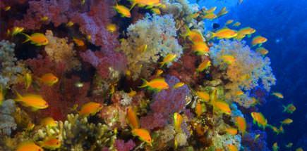 10 דברים שכדאי לדעת על ספארי צלילה בירדן
